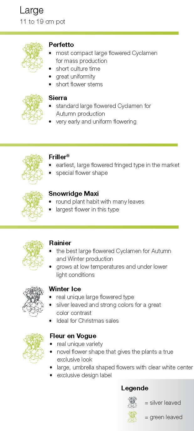 Syngenta Cyclamen Large summary