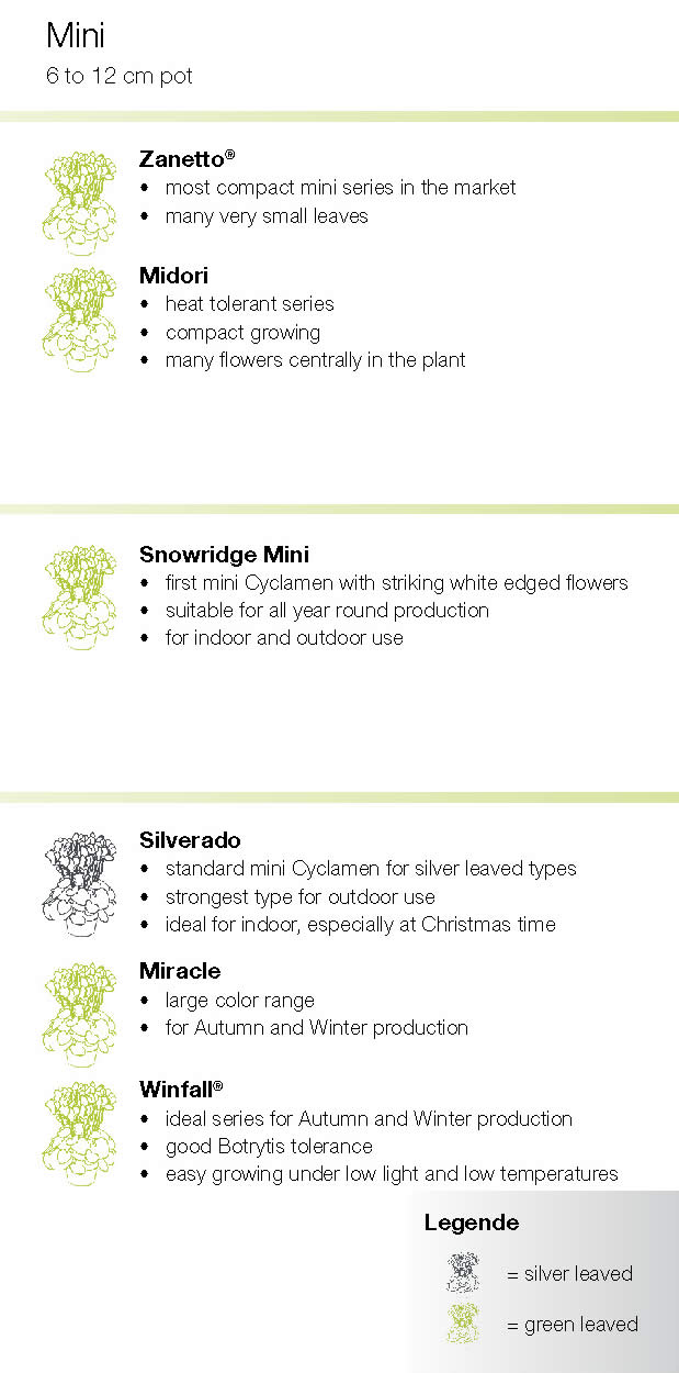 Syngenta Cyclamen Mini summary